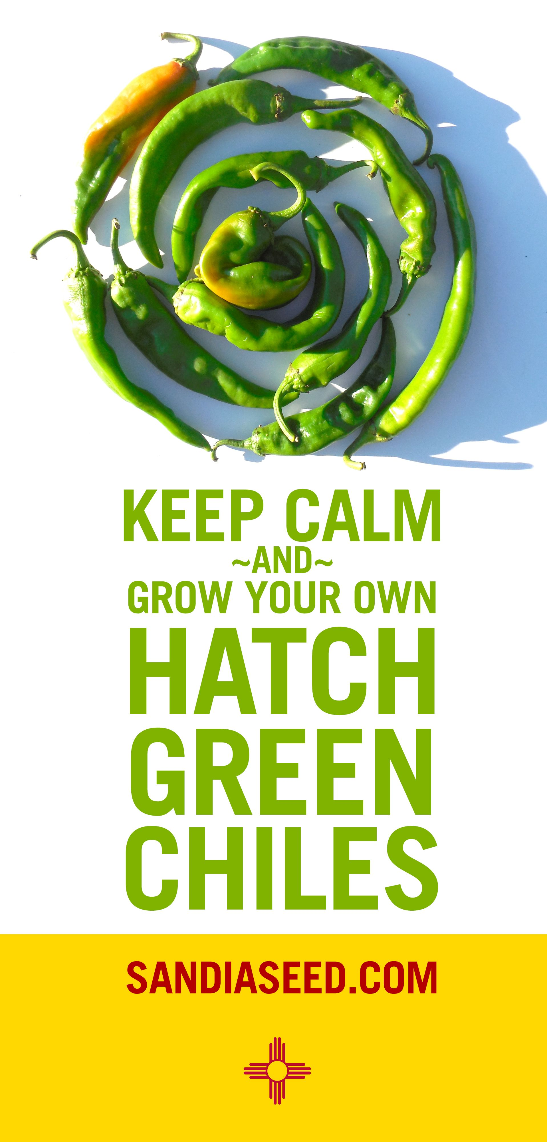 Grow your own hatch green chiles from seed httpwww