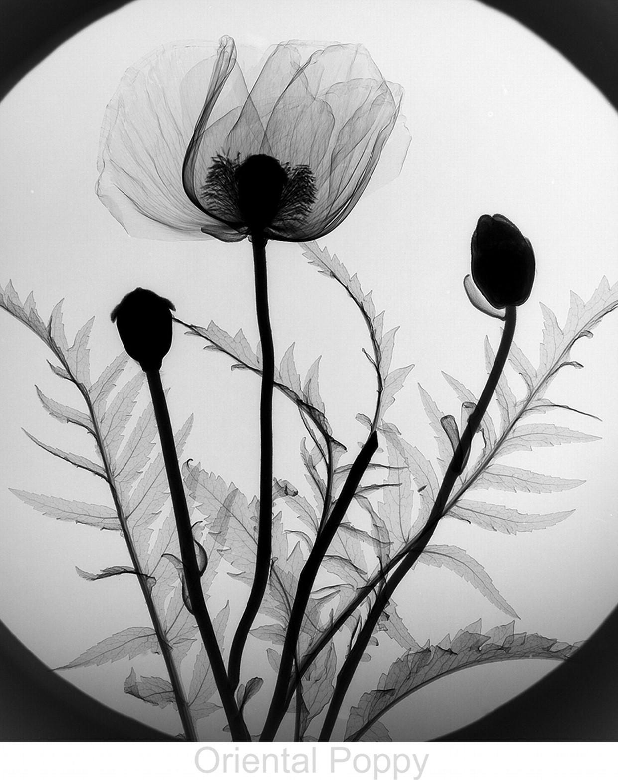Fiori ai raggi X X ray Floral Art nel 2019
