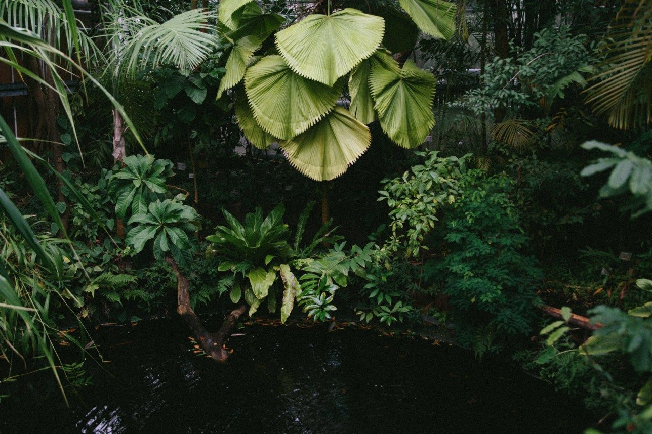 Hortus Botanicus Amsterdam, the tropical greenhouse.