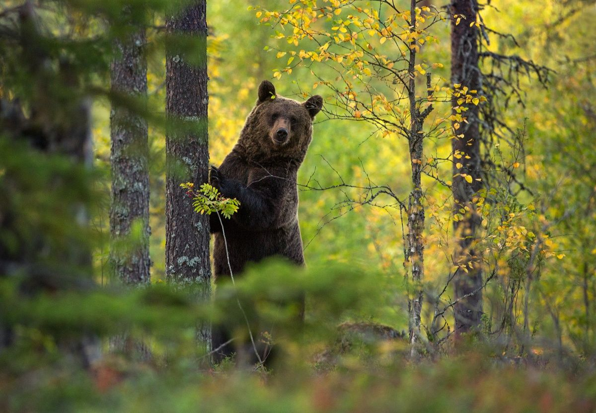Image result for bear in woods