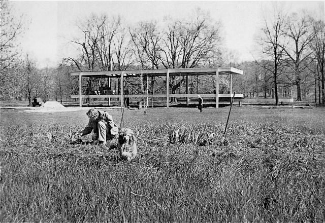 Farnsworth House. Edith & her dog, during the construction of her house.