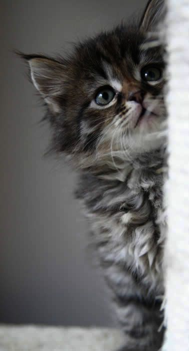 Cats And Kittens For Sale East Sussex Alley Cats And