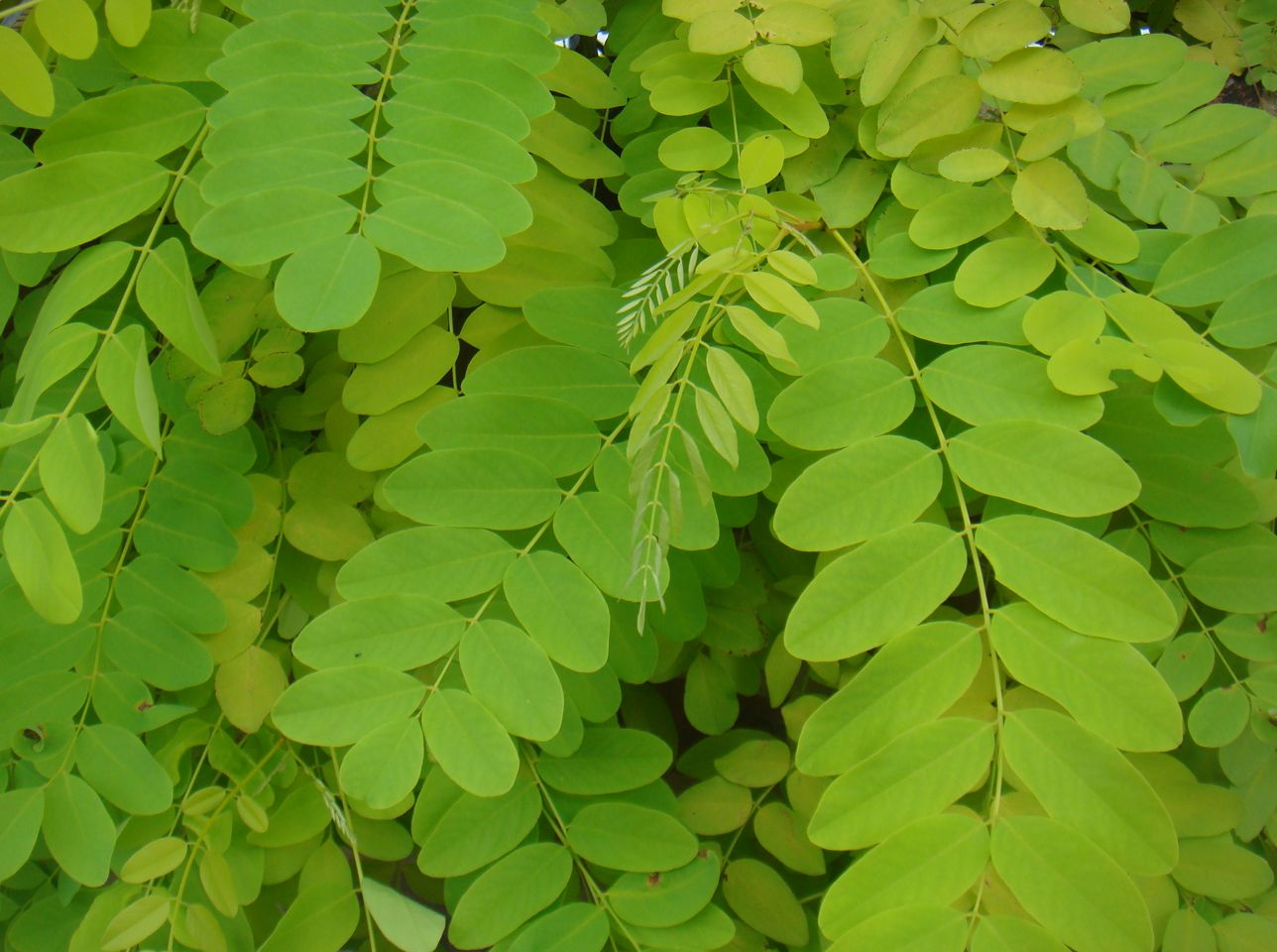 Different Type Of Leaves
