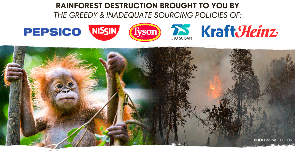 Rainforest Destruction_ What do PepsiCo, Kraft Heinz, Nissin Foods, Toyo Suisan and Tyson Foods have in common? It's not simply that you've trusted these well-known brands enough to have had them in your pantry or refrigerator at one time or another. Each of these snack food corporations have weak palm oil sourcing policies that are driving the destruction of Indonesia's last intact rainforests, including the Leuser Ecosystem.