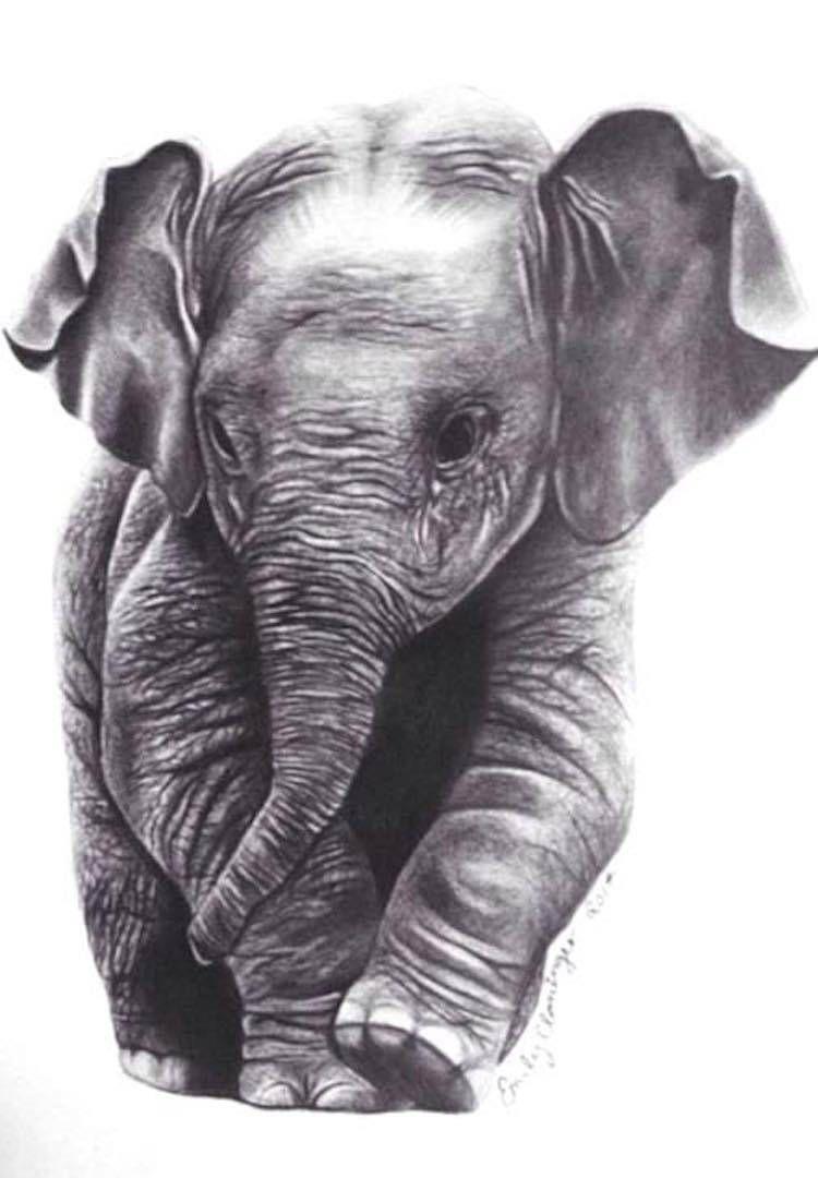 Elephant in 2019 MY A R T W O R K