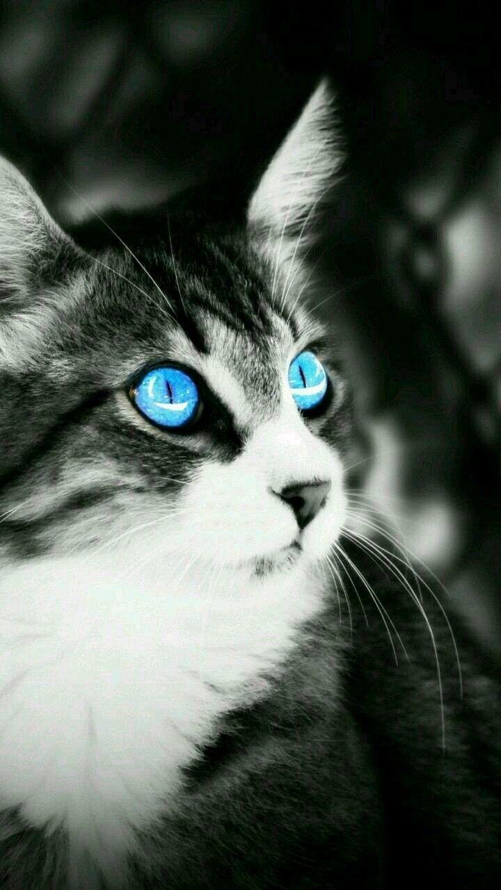 Pin de ADONAY em Felino's. Olhos, Tratamento de imagem