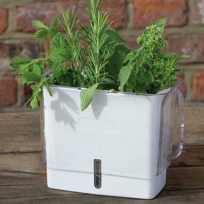 Cole Mason Fresh Herb Keeper Plastic P*T Planter In 2019 400 x 300