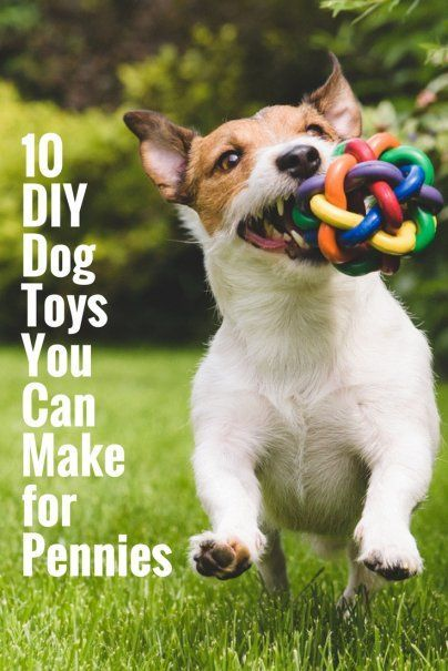 10 Diy Dog Toys You Can Make For Pennies Diy Dog Toys Homemade
