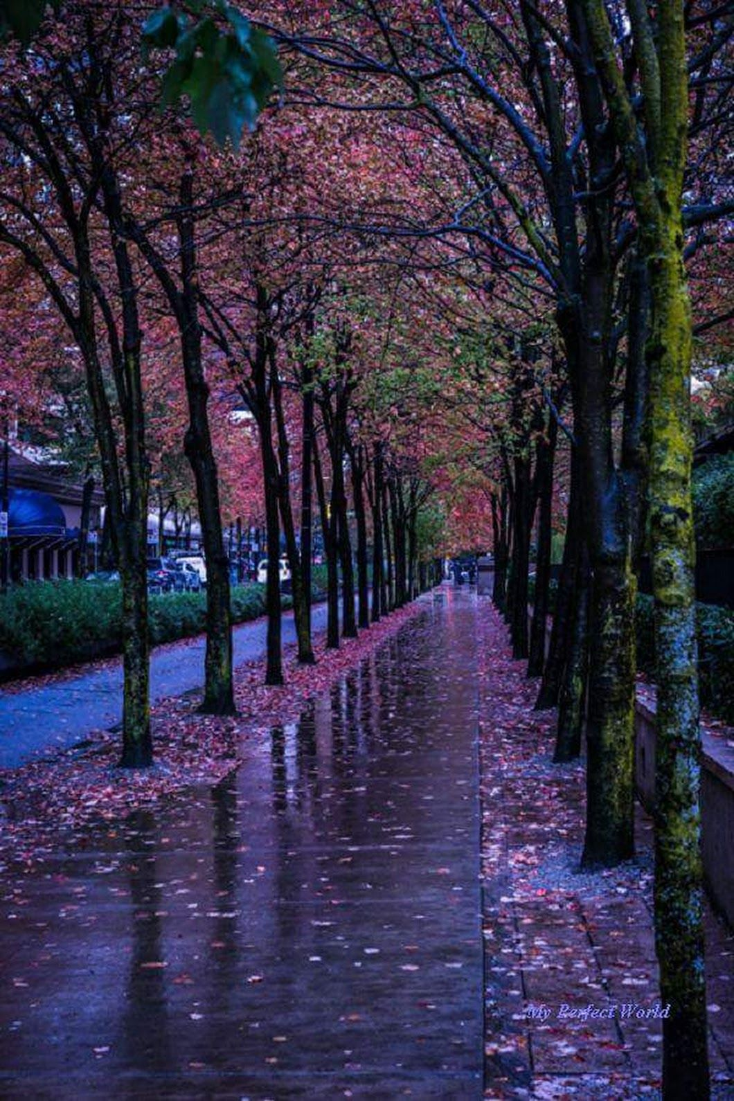 Sign In Autumn Rain Nature Photography Rain Wallpapers