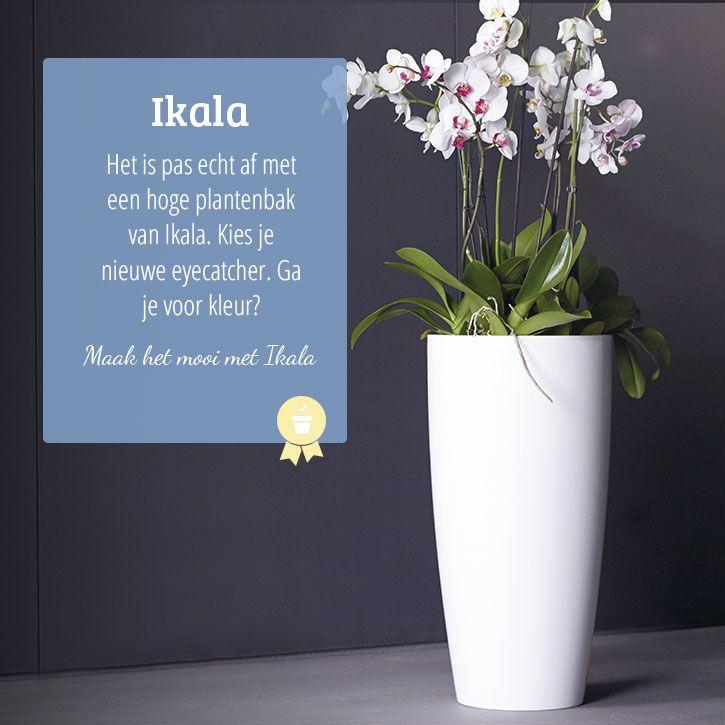 Hoge Bloempotten Voor Binnen.High Indoor Planter Hoge Bloempot Voor Binnen Hal In 2019