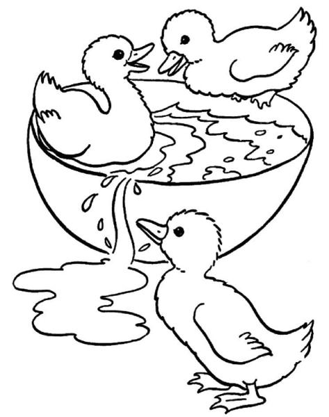Dessin colorier animaux de la ferme animaux 12 coloriages imprimer broderies - Canard dessin facile ...
