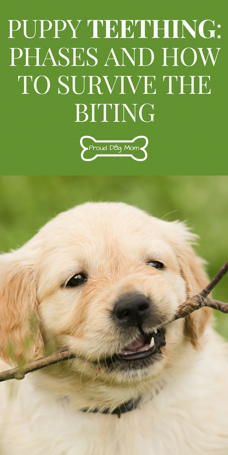 Pin On Dog Training Ideas Etc