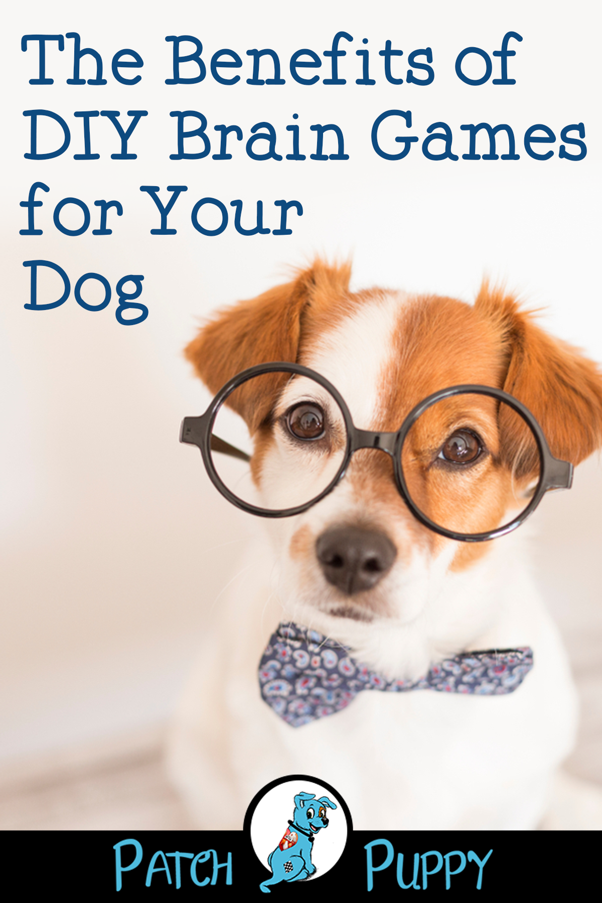 DIY Dog Toys from Water Bottles Make your dog a treat