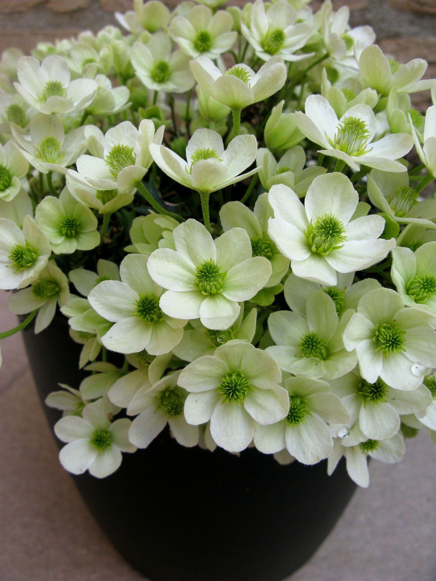 0d23f731a3f9573e03bb919bd413b75c Luxe De Fleurs De Jardin Des Idées