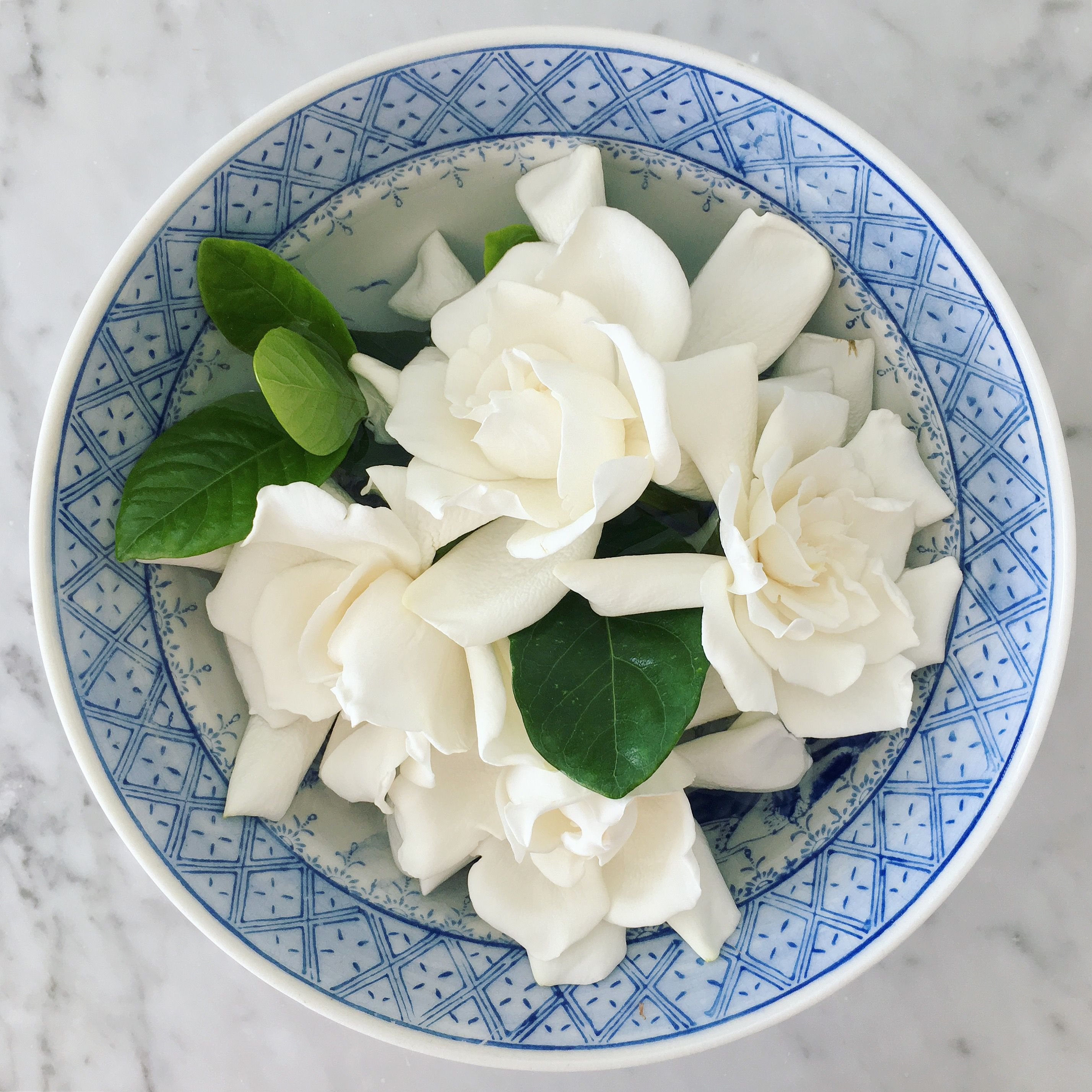 Gardenias Have Some Deep Floral Meanings It Actually Says You