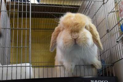 お腹に希望を うさぎのきわみ ハイペット うさぎ ペット ウサギ