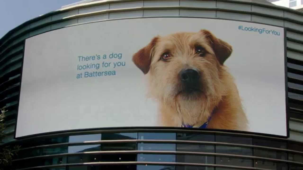 Looking For You Battersea Dogs Dog Charities Battersea Dogs Home