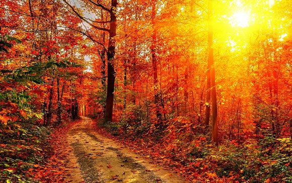 14 Colorful Autumn Wallpapers Web Design Ledger Autumn Scenery Autumn Forest Scenery