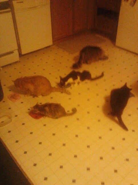 All 5 at snack time...