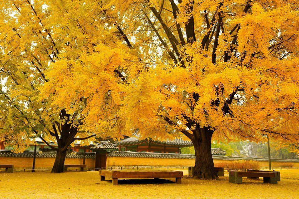 Gyeongbokgung Palace Seoul Beautiful Taman Kota Tempat