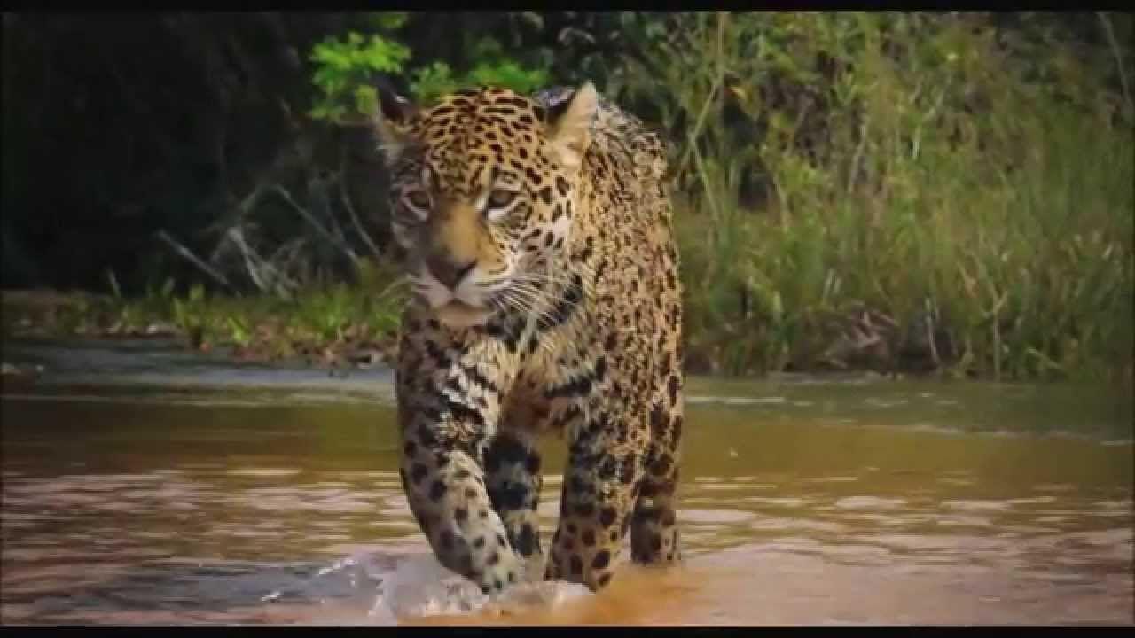"Documentary Colombia Wild Magic - Documental ""Colombia magia salvaje"" - ..."