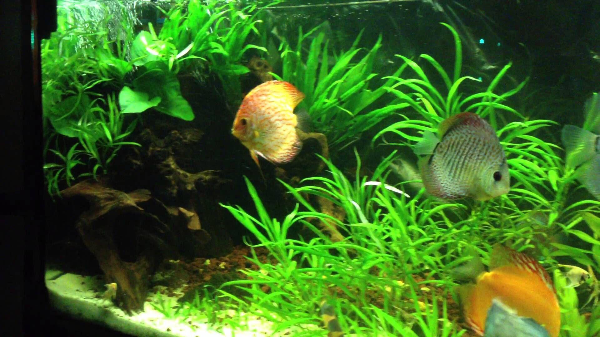 0d264feb0fd3c590830d9e78d2cfa7e6 Frais De Aquarium Tropical Schème
