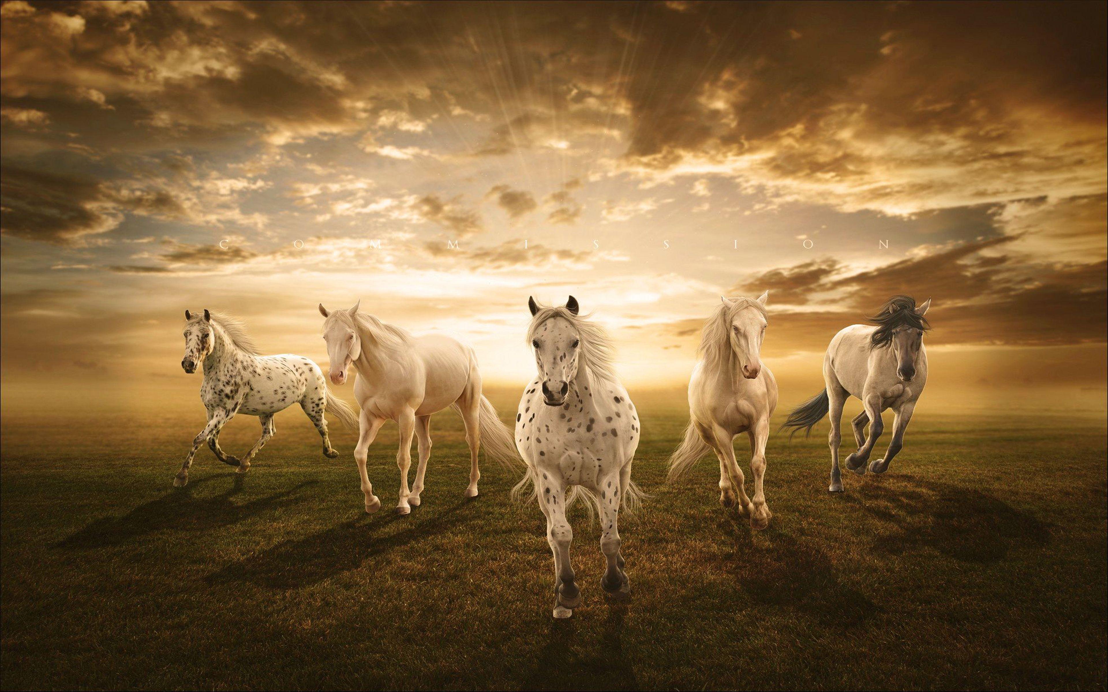 horse wallpaper hd | White Horses Desktop Background : Wallpapers13.com | Horse wallpaper ...