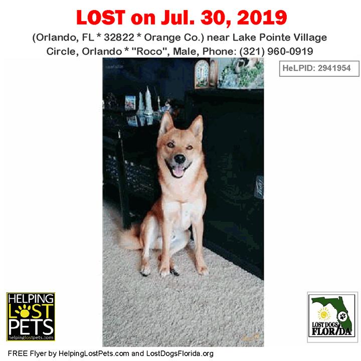 Lost Dog Have You Seen Roco Lostdog Roco Orlando Lake Pointe Village Circle Orlando Fl 32822 Orange Co Dog 07 30 2 Losing A Dog Dogs Losing A Pet