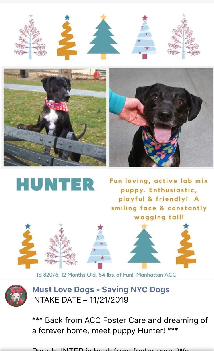 PUPPY ALERT 🆘PRECIOUS WONDERFUL HUNTER LISTED TO DIE AT