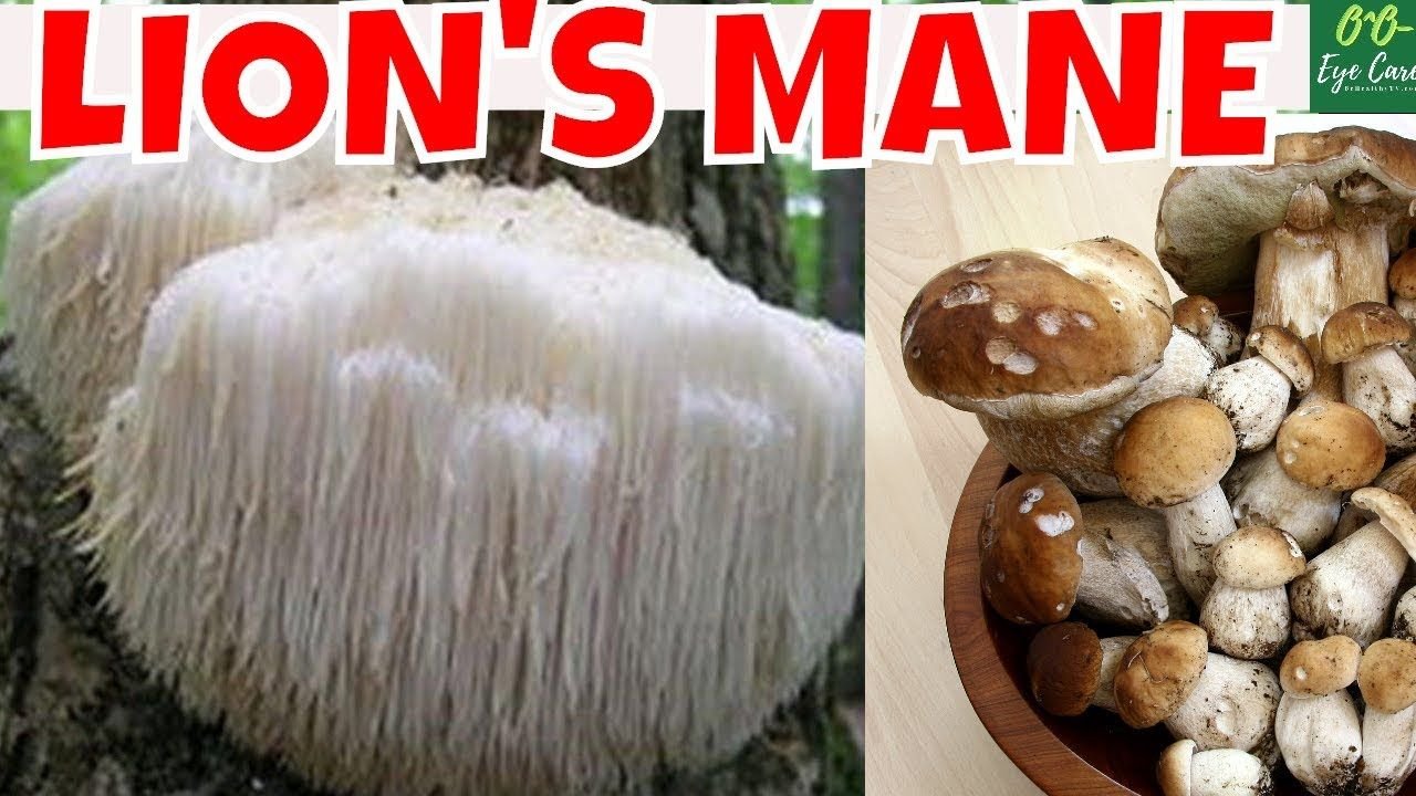 Lions mane mushroom health benefits of lions mane