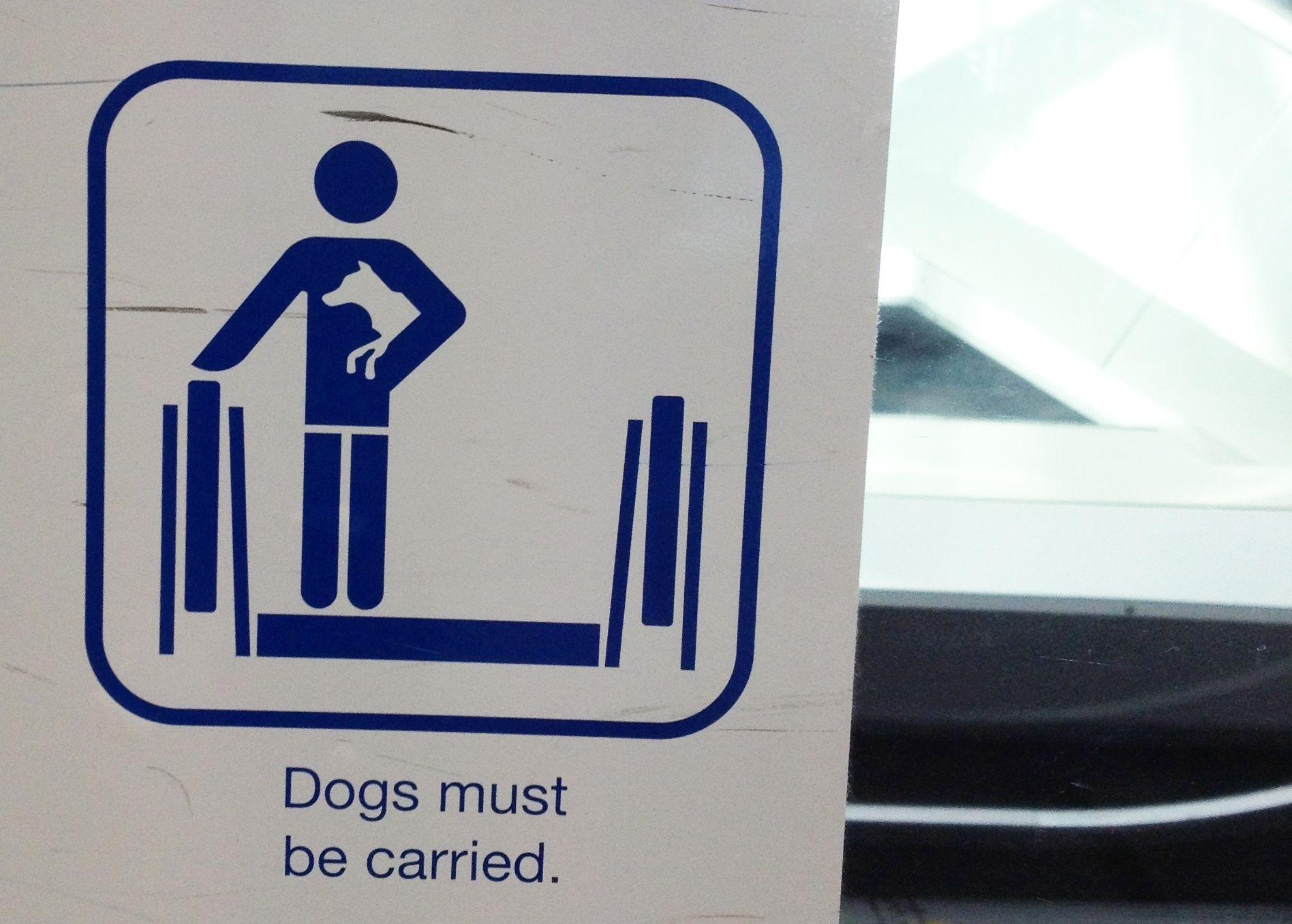 Sulle scale mobili tenere i cani in braccio