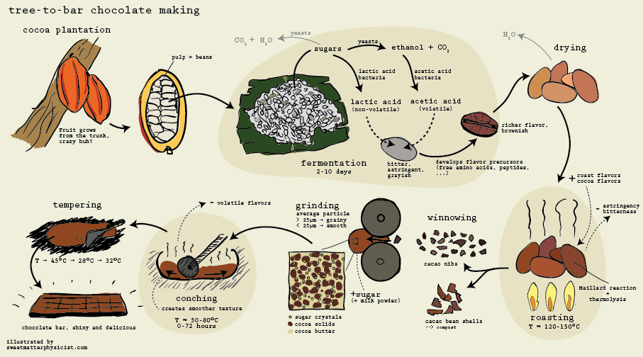 Illustration Infographic Of The Chocolate Making Process