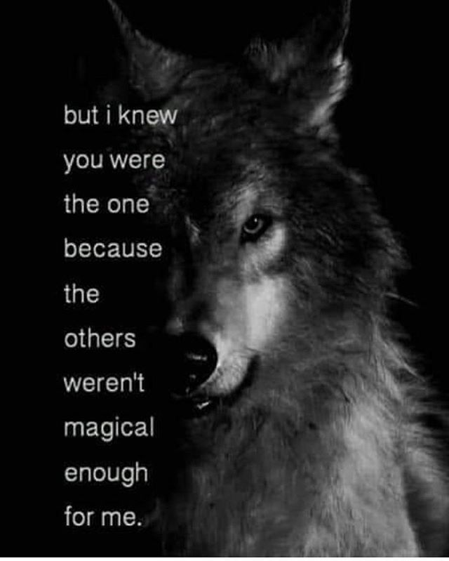 Pin by Julia Pfeifer on wolf   Wolf quotes, Warrior quotes