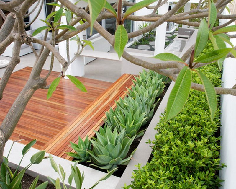 Impressive Phormium technique Perth Contemporary Deck Decoration ideas with  deck geometric hedge mass planting minimalist order planters succulents terraced Modern Aloe Vera Garden Patio Ideas gardening Pinterest