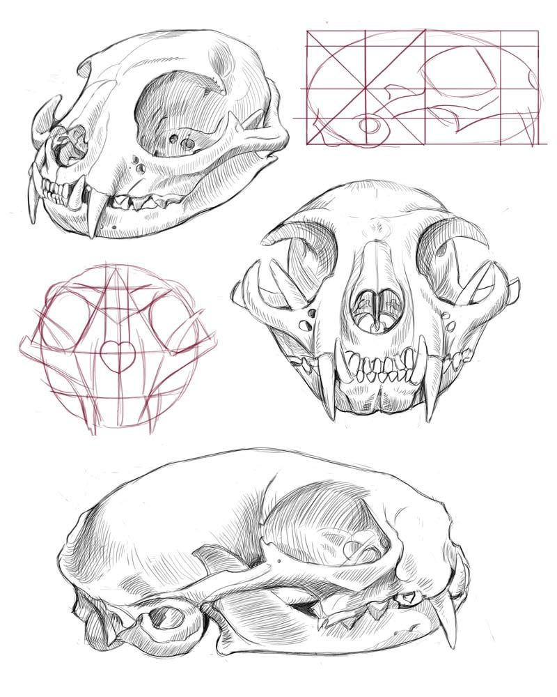 cat skull anatomy - Google Search … | Cat tattoo final | Pinte…