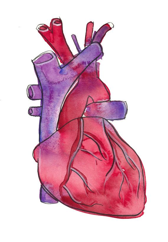 have a heart-signed archival anatomical heart illustration fine, Human Body