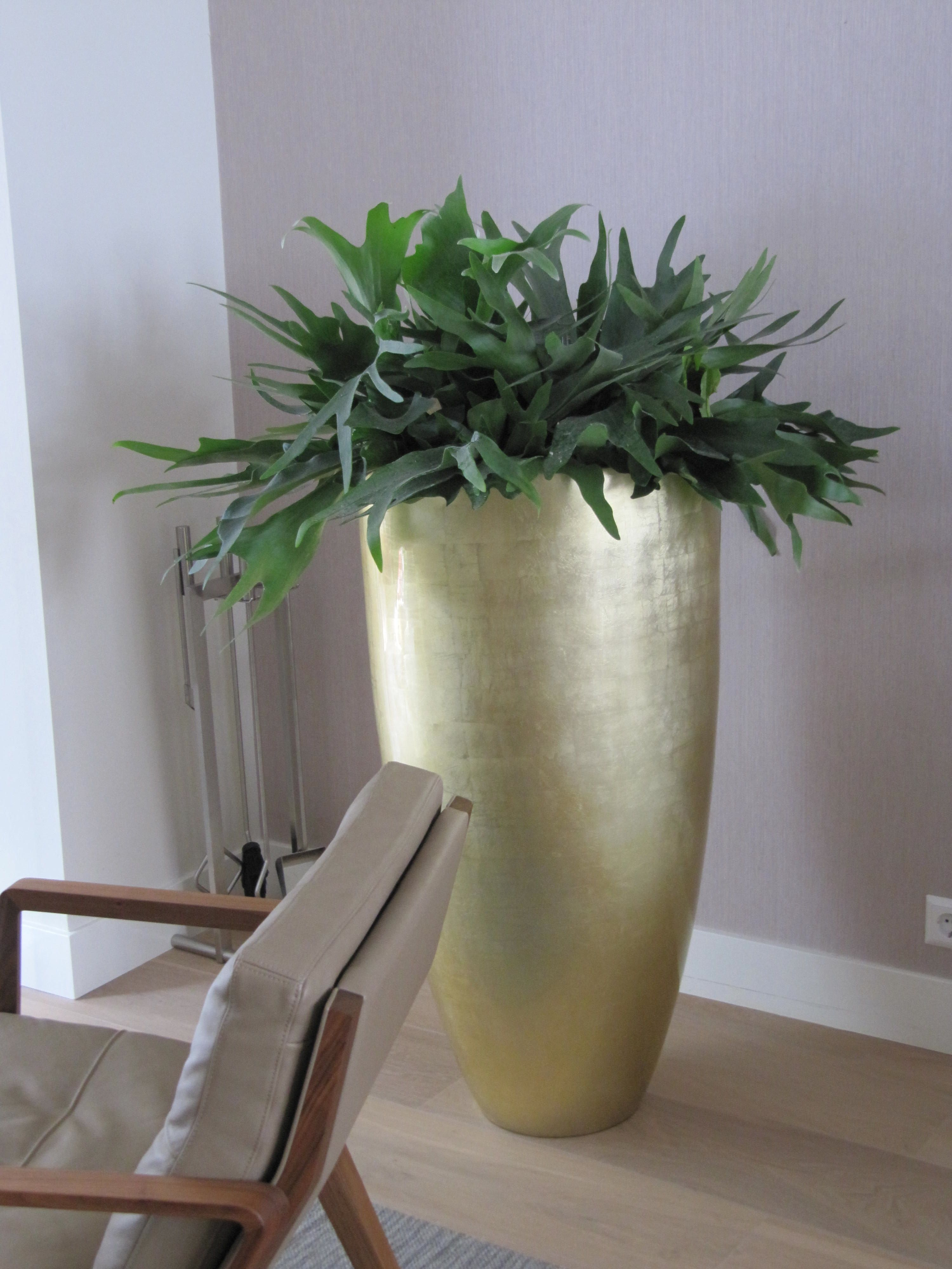 1000  images about kamerplanten, moderne look on pinterest ...
