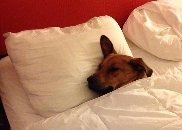 perros-cama-15