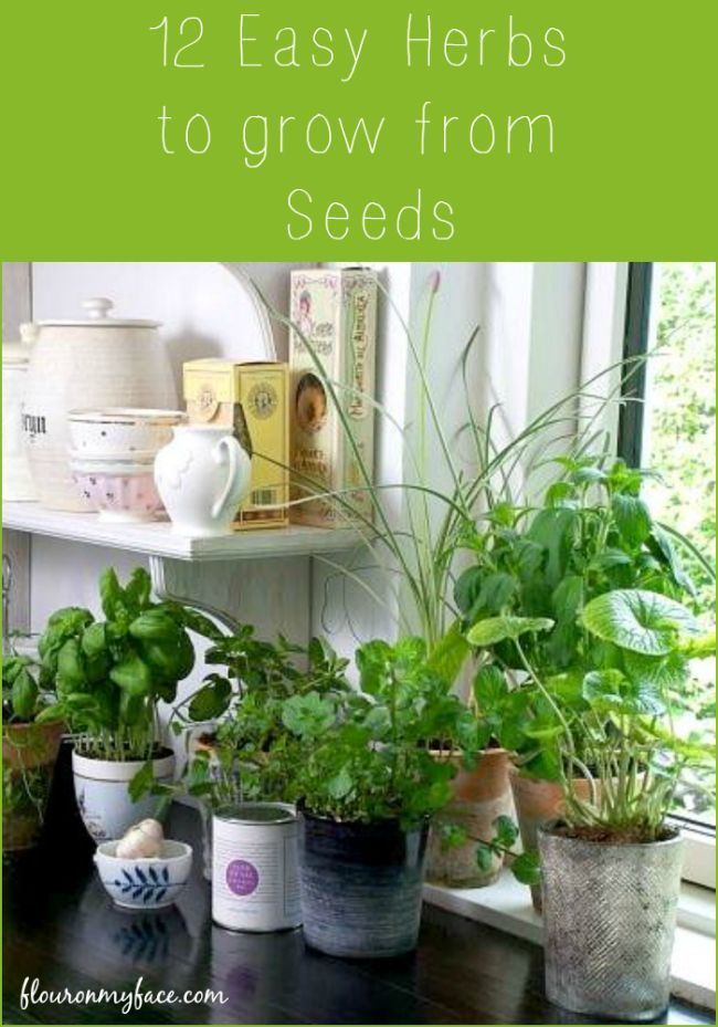 12 Easy Herbs To Grow From Seeds Easy Herbs To Grow Kitchen Plants Herbs Indoors