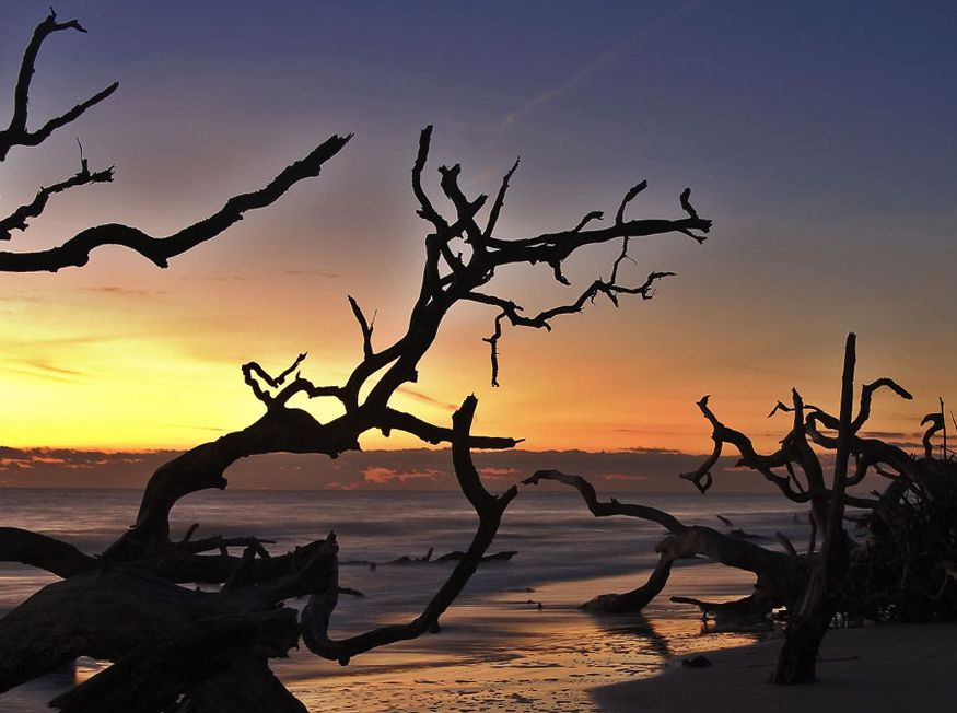 Driftwood Beach Jekyll Island Georgia Very Beautiful And Otherworldly