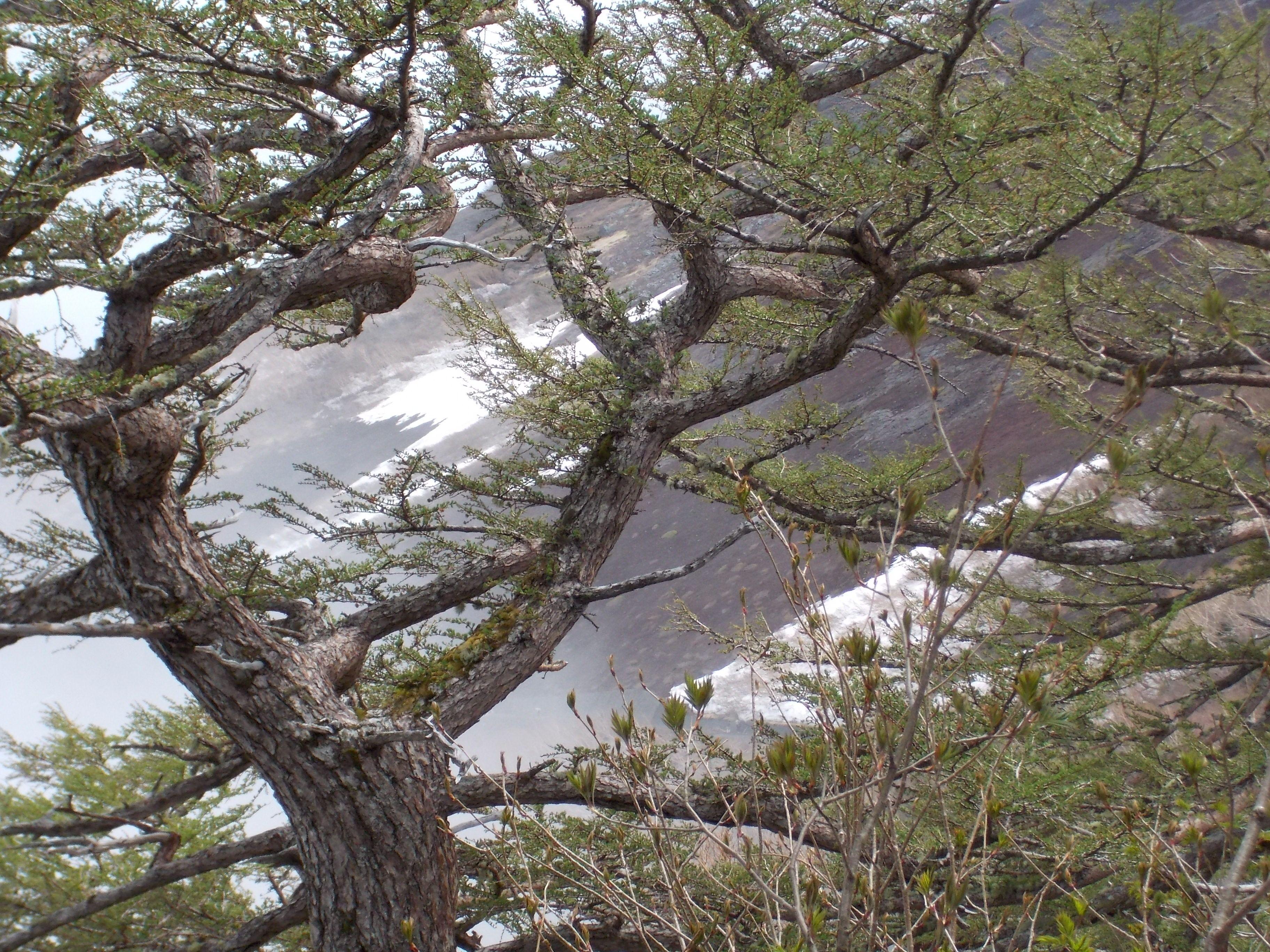 A partial view of Mt. Fuji Tree, Plants, Garden