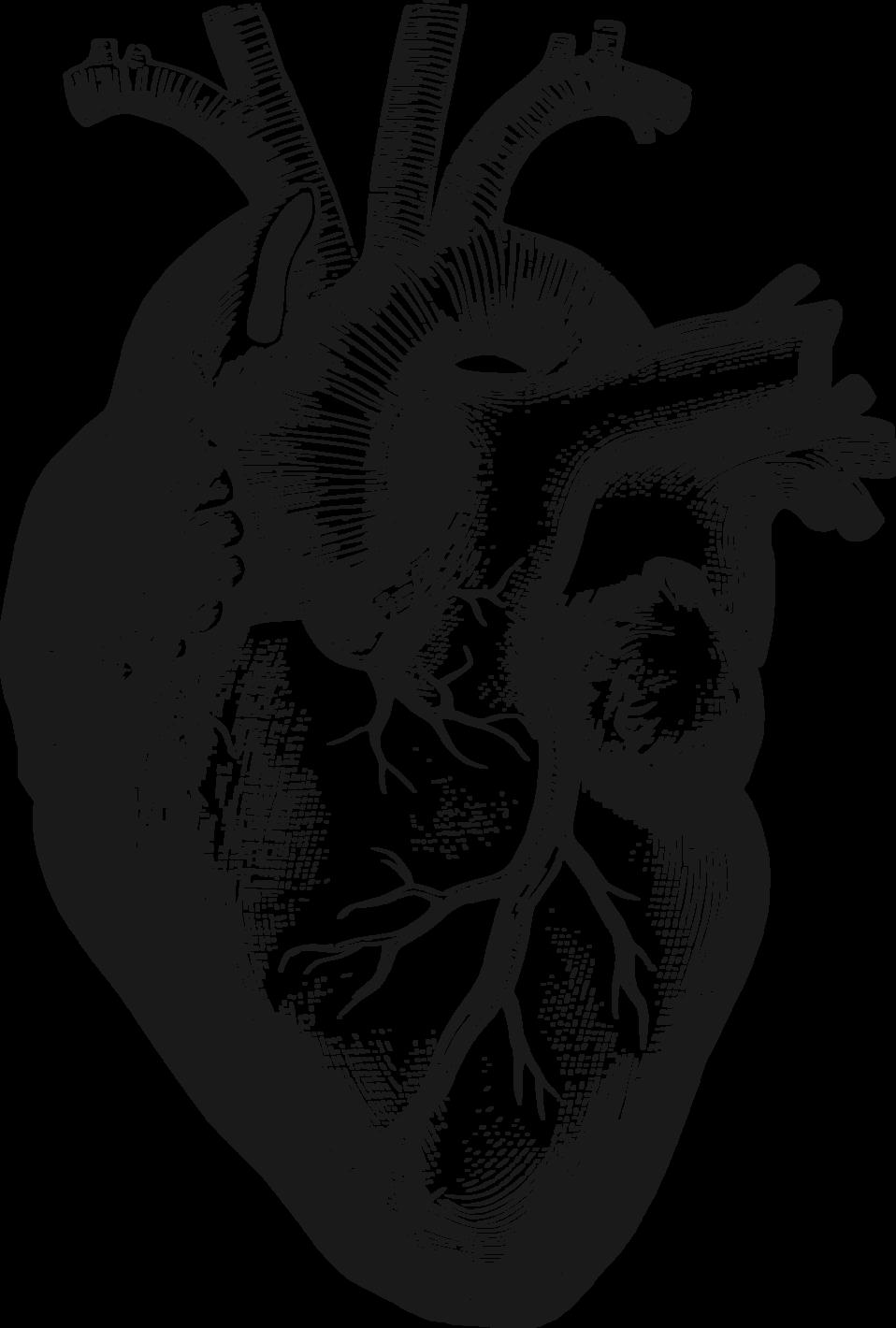 Anatomical Heart | Art | Pinterest | Anatomical heart, Art images ...
