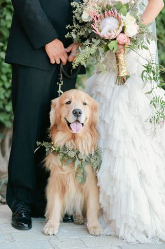 dogs at weeddings - mascotas - bodas - danielafierrowp