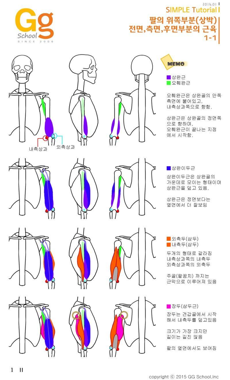 게임그래픽전문 지지스쿨☆ | Anatomy | Pinterest | Anatomy, Drawing ...