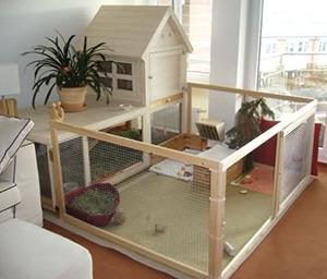 BunnyBunch | Informatie - Binnenkonijnen - konijnen houden in huis | Webwinkel, informatie & forums
