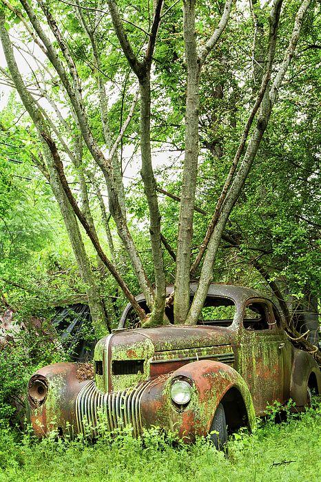 Reclaimed By Nature by Jurgen Lorenzen