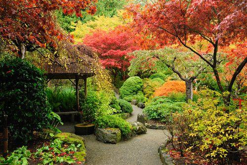 garden-dream.jpg (500×333)   Gardening   Pinterest   Dream garden