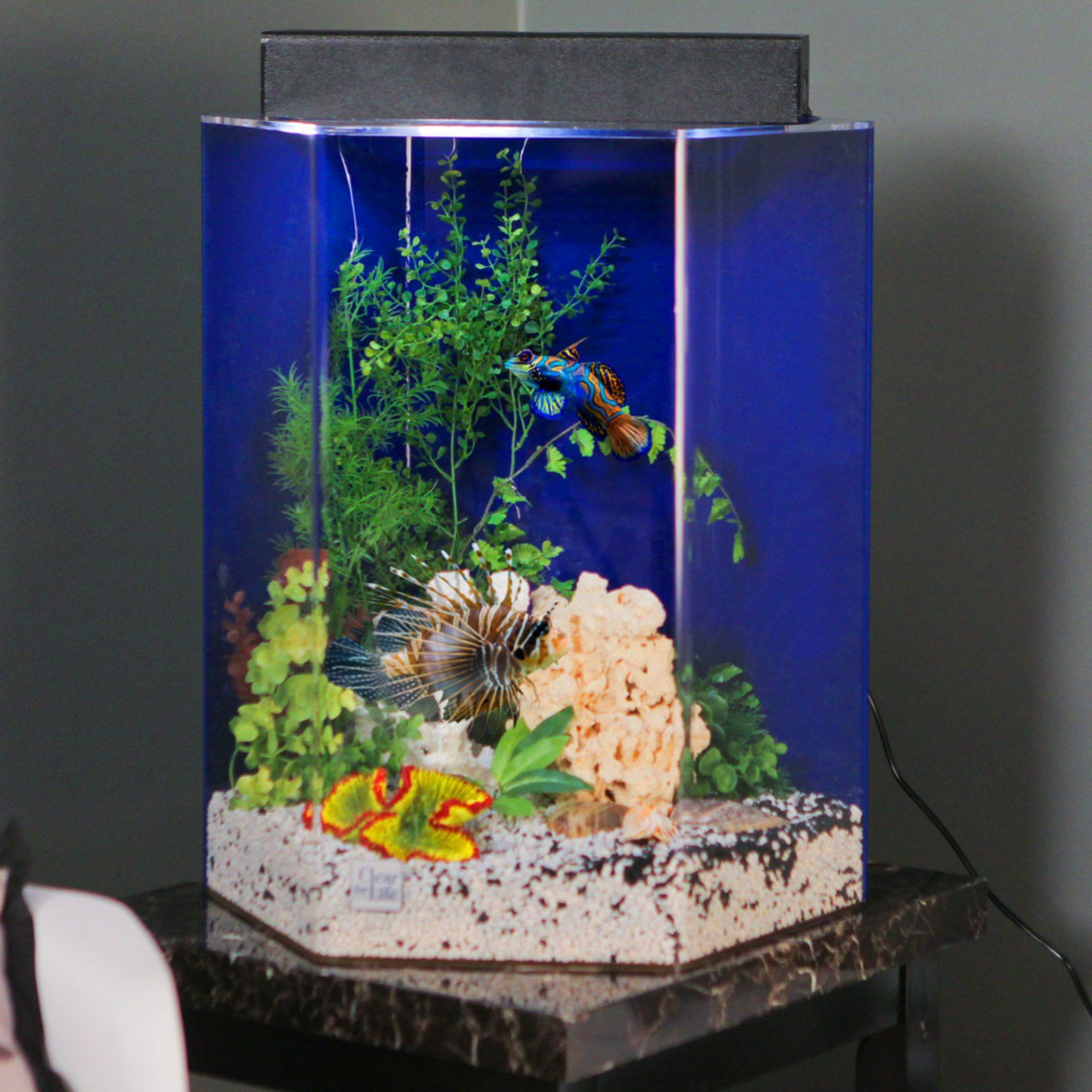 Have to have it Clear For Life Hexagon Aquarium $145 99