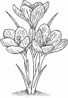 Malvorlage Wiesenblumen