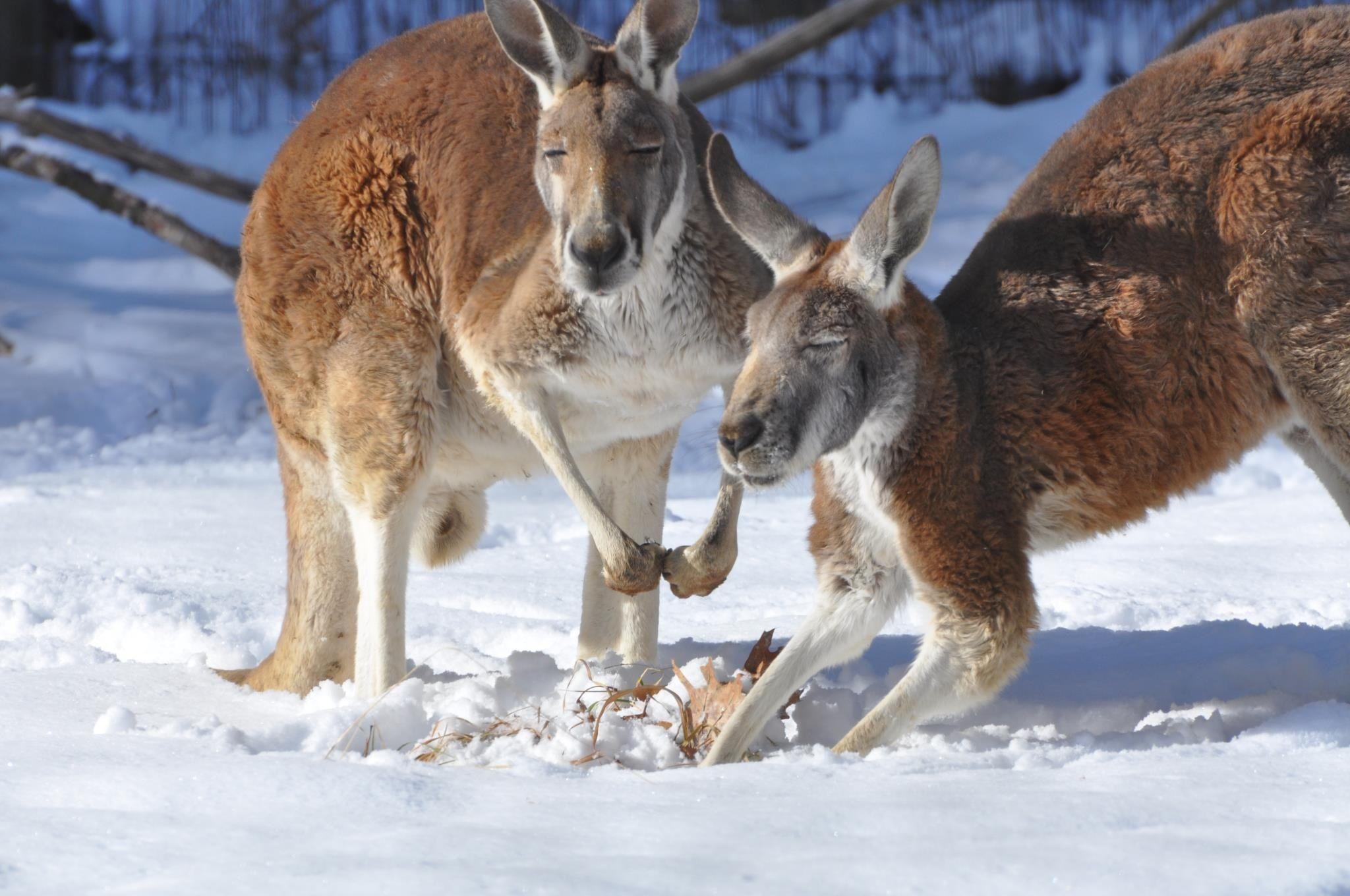 Winter at Binder park